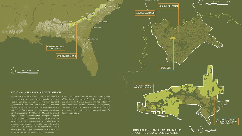 Longleaf Pine Conservation Project