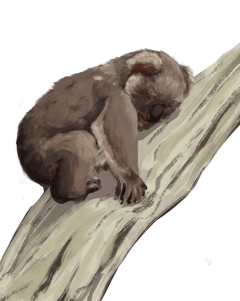 final koala for connor