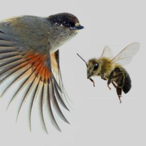 birds+bees