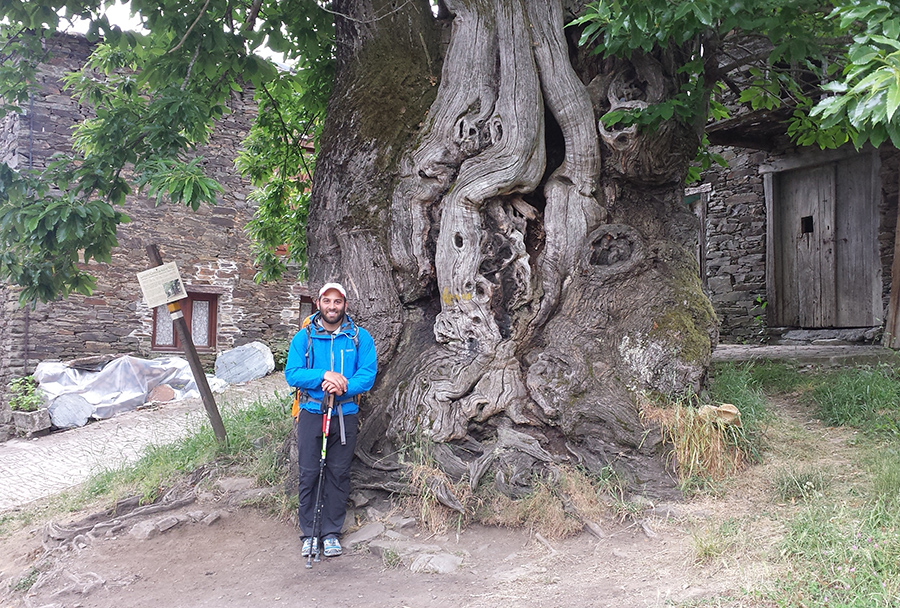 Eli Simaan posing by an 800-year old chestnut tree in the village of Triacastela.