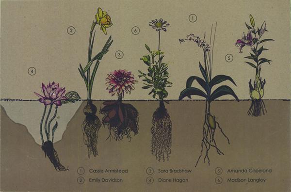 Plants-web
