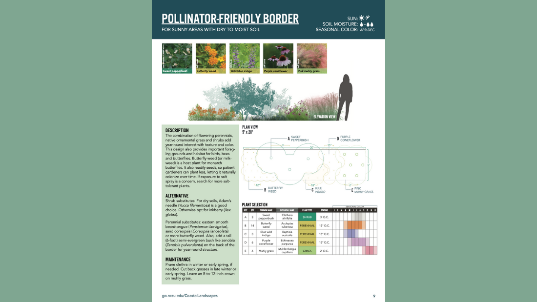 Above: A new landscaping design series includes this pollinator-friendly border template.