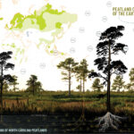 Peatland: Strategies for Restoration, Design, and Planning of North Carolina Peatlands, authored by Madalyn Baldwin (MLA 2019)